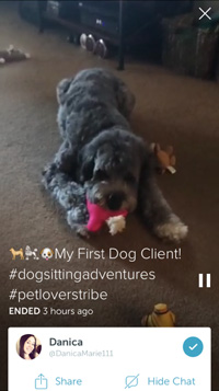 pet sitter on periscope